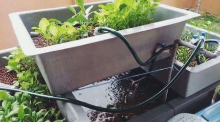 How To Build A Cheap DIY Backyard Aquaponics System!