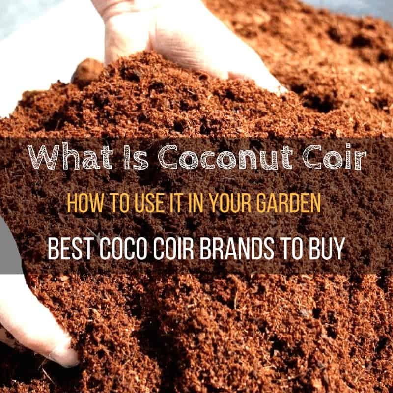 Coco Coir Brands To Buy