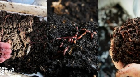 Vermicomposting – Grow Better With Worm Castings Both Indoors And Outdoors