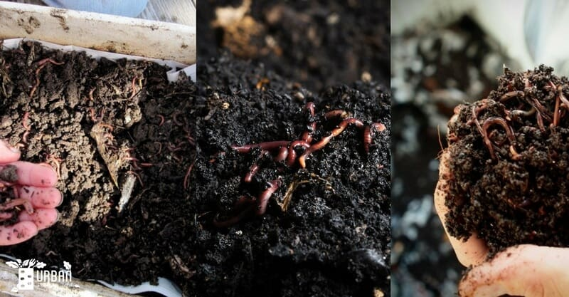 How to start Vermicomposting to Make Your Own Worm Farm in Home