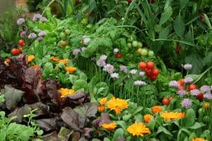 Companion Planting – Secret Behind Growing Healthy Vegetable In A Small Space