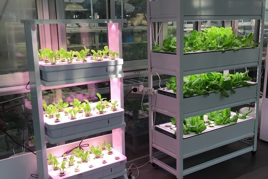 Hydroponic System 101: 6 Basic (+3 Advance) Types How They Work And How To Build Your Own