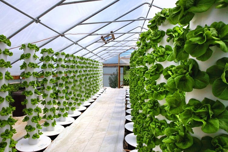 Popular Variations Of Advance Hydroponic Systems