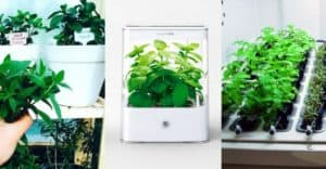Best Hydroponics Kits To Grow Your Indoor Herb Garden All Year Long