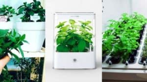 5 Best Hydroponics Herb Garden Kits To Grow Indoor All Year Long