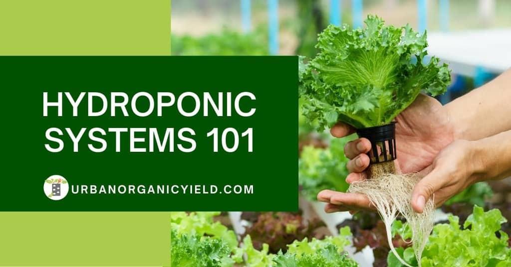 Hydroponics Gardening Feature