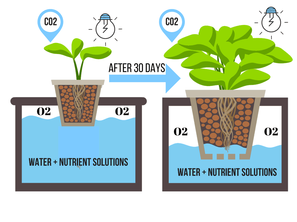 9 Different Types Of Hydroponic Systems How They Work