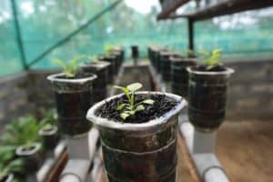 Hydroponic System 101: 6 Basic (+3 Advance) Types & How To Build Them