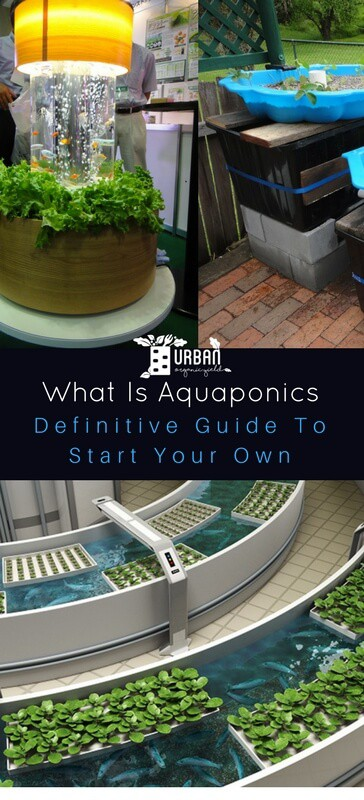 A Definitive Guide To Start Your Own Aquaponics System