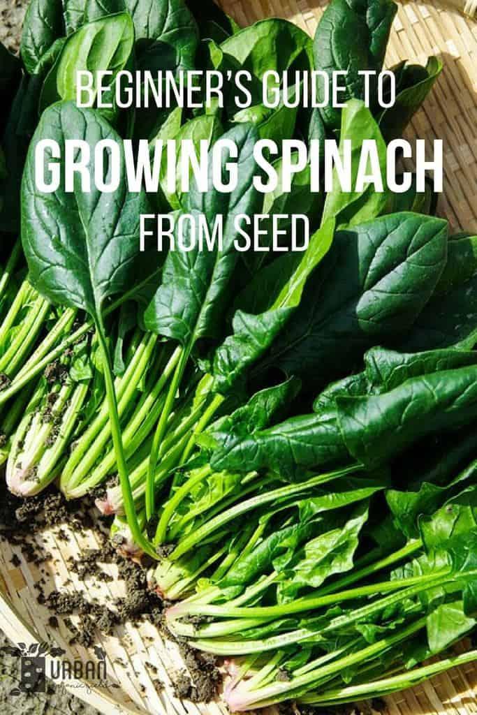 Vegetable Garden Beginner Seeds