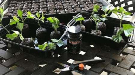 Best Rooting Hormones For Propagation