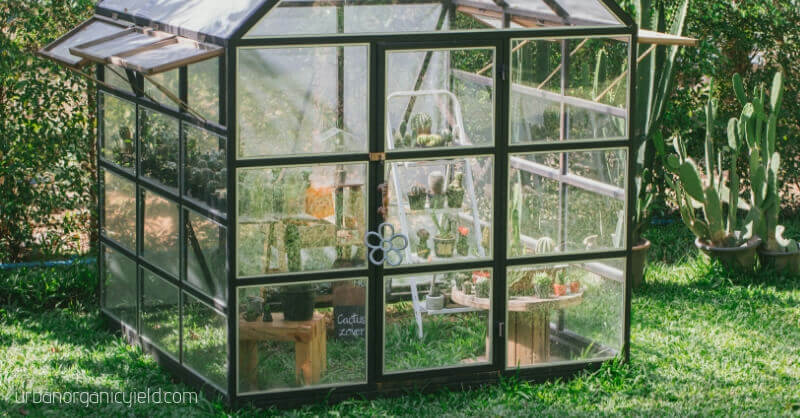 Best Small Greenhouse Kits To Grow Your Plants This Winter In Small Spaces  Or Indoor