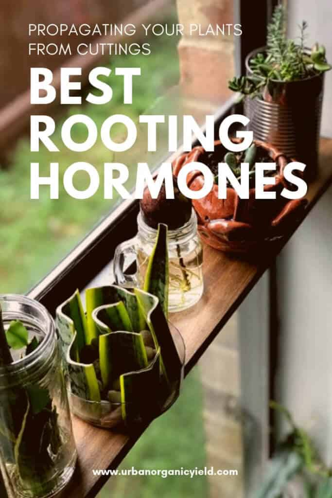 Here how to choose the best rooting hormones (liquid, powder or Gel) for Increasing plant propagation success