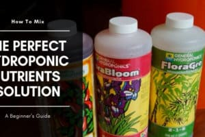 How I Mix & Use my Hydroponic Nutrients Solution for Best Results For Growing