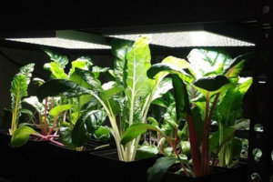 The Best Full Spectrum LED Grow Lights for Indoor Plant Growth
