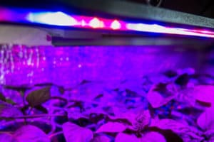 How to Choose The Best Led Grow Lights for Indoor Plants & Indoor Growing