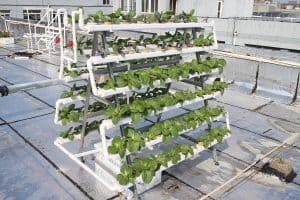 Hydroponic Gardening For Beginners: Build A Homemade Systems To Help You Up Your Indoor Growing Game