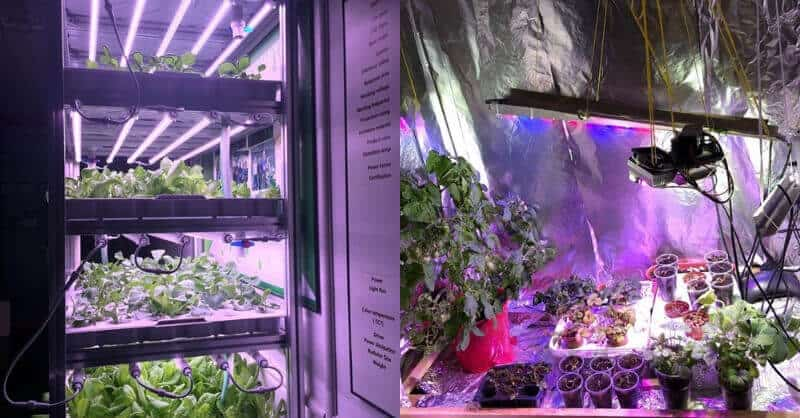 Grow Tent Vs. Grow Box Which Is Better