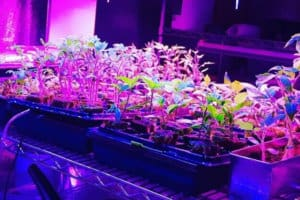 Using Artificial Grow Lights For Indoor Plants: Expert Tips & Advice to Get Started