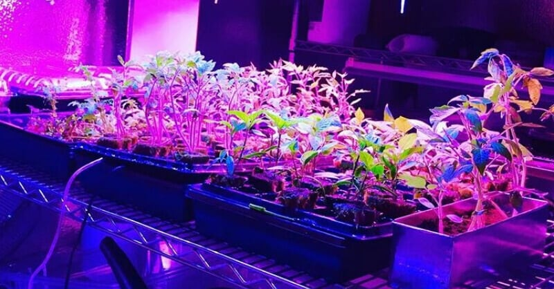 Growing Plants Indoors With Artificial Light An Ultimate Guide For Beginners