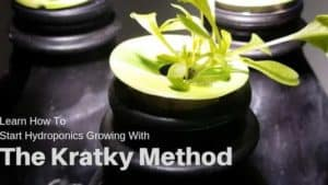 How To Start Hydroponics Growing With The Kratky Method