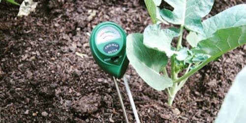 How to Test and Measure Your Soil pH With a pH Meter