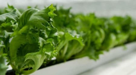 Hydroponic Gardening For Beginners Build a Homemade Systems For Indoor Growing