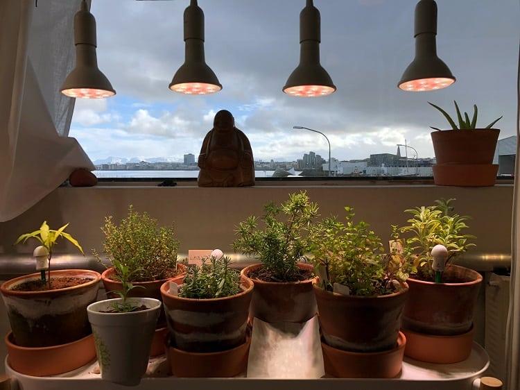 Grow Lights For Plants