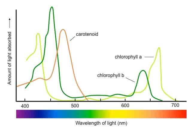 absorption-spectrum_med