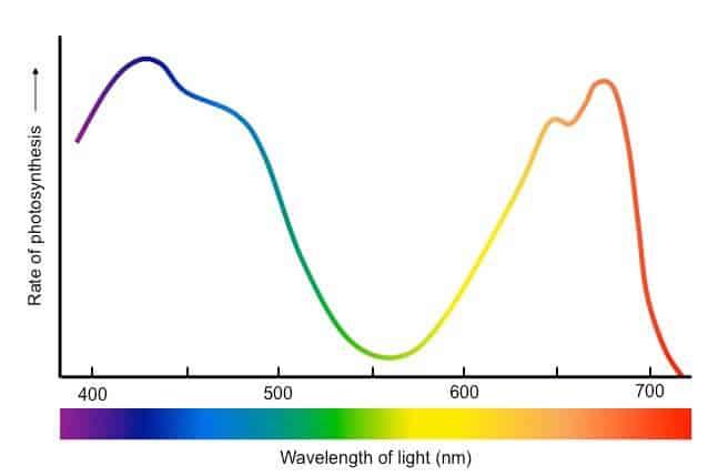 action-spectrum_med