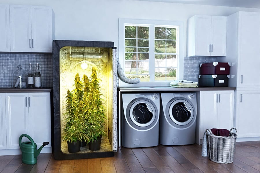 Grow Tent Vs Grow Box Which Is Better For First Time Grower