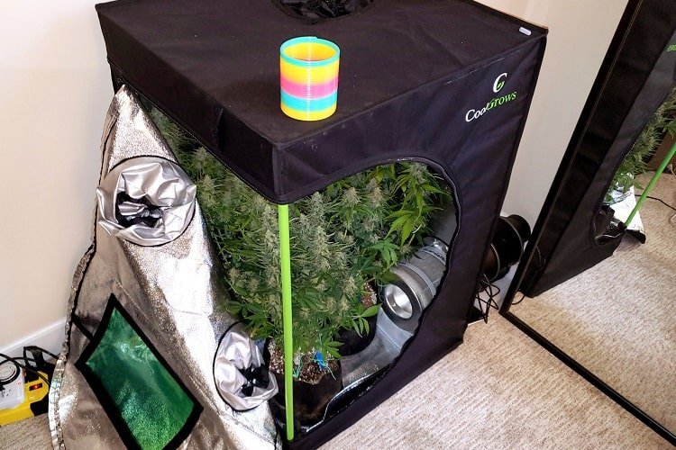 Grow Tent Vs Grow Box Comparison - Which Is Best?