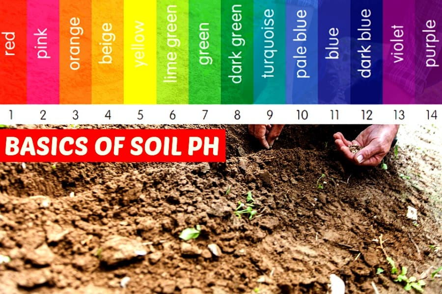 How To Test Soil PH At Home Without A Test Kit