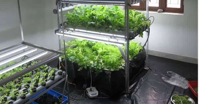 Best Water Chiller for Hydroponic Reservoirs Choose the Right Size for Your System