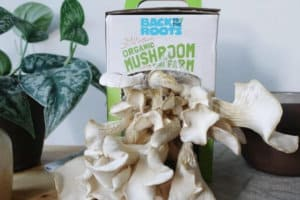 Beyond The Oyster: 12 Best Mushroom Growing Kits To Grow Endless Mushrooms At Home