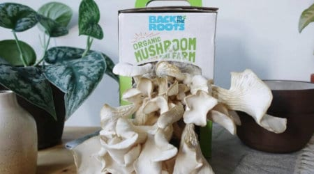 The Best Mushroom Kits to Grow Your Own