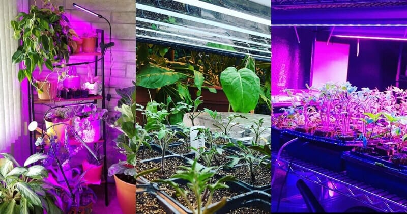 15 Easy Yet Inexpensive DIY Led Grow Light Ideas For Indoor Growing