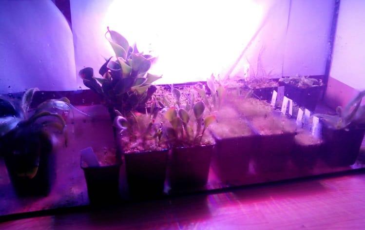 50W LED Grow Lights Setup