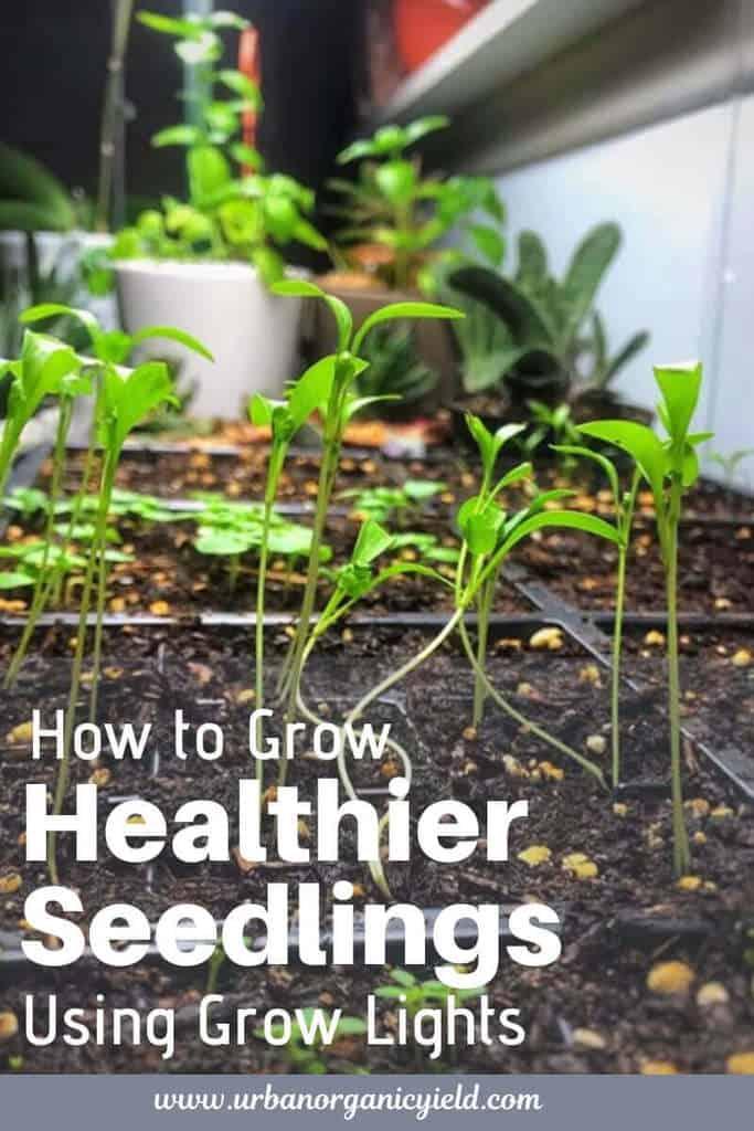 Best Grow Lights For Seedlings To Ensure Rapid, Healthy Growth Of Your Seedlings