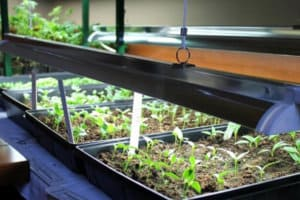 Best Grow Lights For Seedlings To Ensure Rapid, Healthy Growth Of Your Seedlings