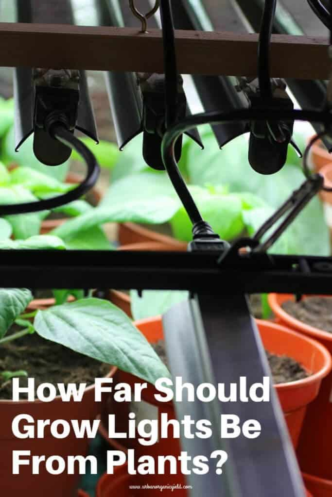 Ever wondered what the optimal distance is between your grow light and your plant