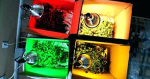 How Does The Color Of Light Affect Plant Growth & And Help Them Grow Better