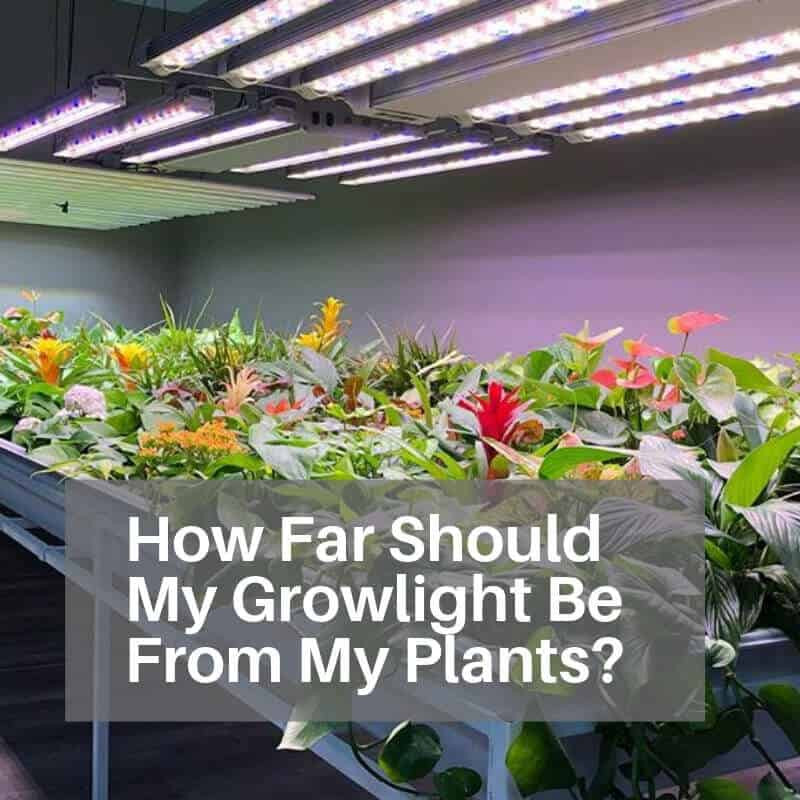 How Far Should My Growlight Be From My Plants Led grow light distance