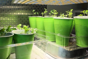 How Long To Keep Grow Lights On Plants? Length Of The Light-Dark Cycle For Maximum Yields