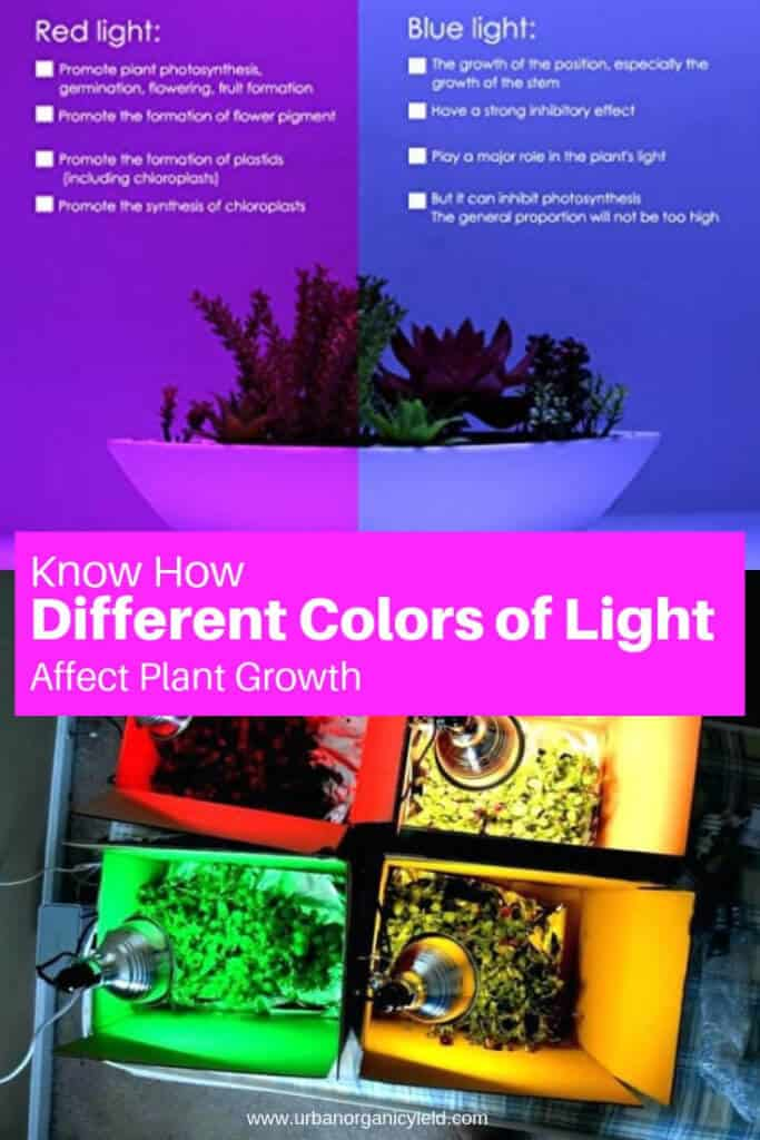 The effect of red, blue and white light on plant growth - Setup of the experiment
