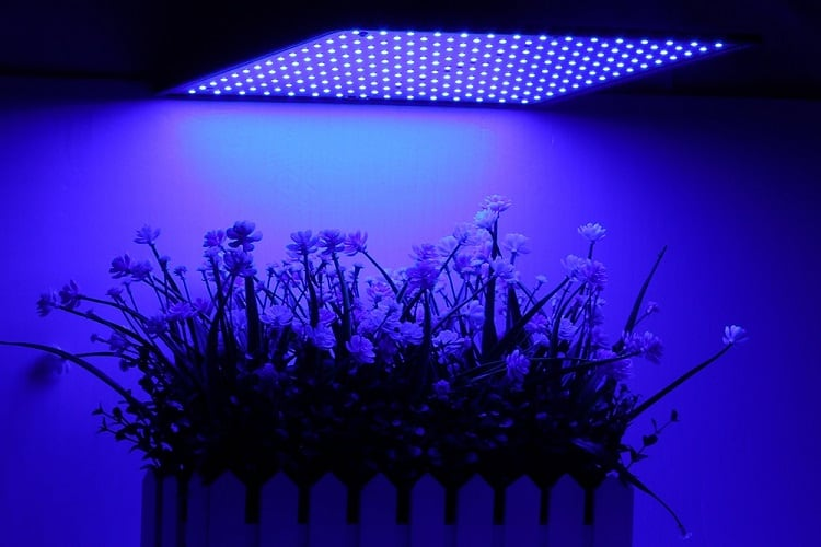 Why Do Different Grow Lights Need To Be Hung At Different Heights?
