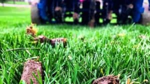 Lawn Aeration: Why, How And best time to aerate and overseed lawn