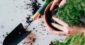 Best Potting Soil Brands For Herbs, Potted Vegetables & Indoor Plants