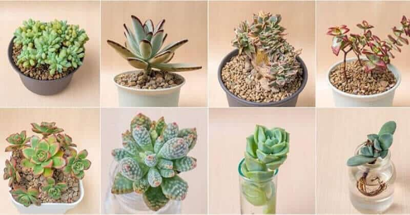 67 Different Types Of Succulents & Cactus With Pictures to Grow Indoors & Out (1)