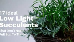 17 Best low light succulents and Cacti That Don't Need Full Sun To Thrive
